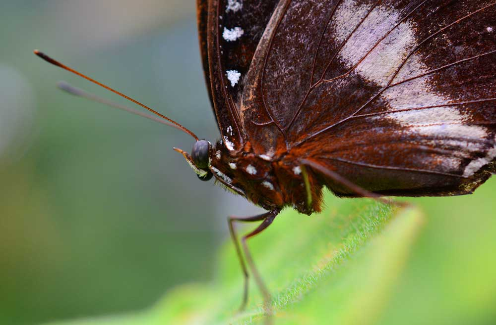 colin_photo-butterfly